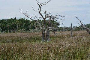 driftwood island 016