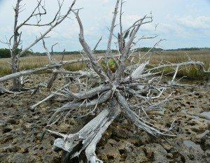 driftwood island 031