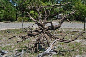 driftwood island 065