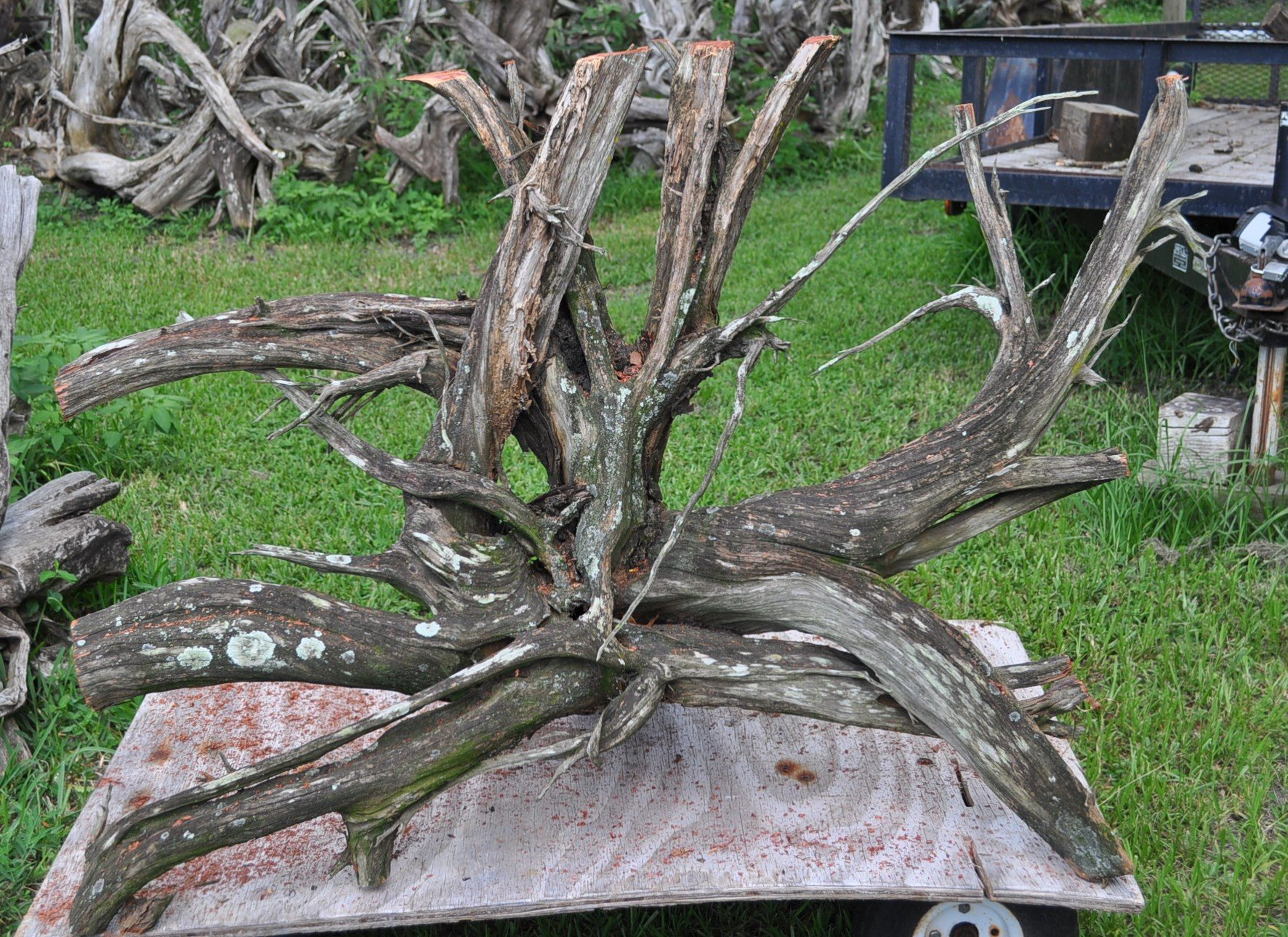 A driftwood dining table for Sal & Reggie