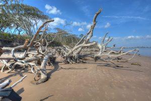 the boneyard, a driftwood beach