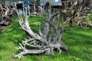 Raw dining table stump