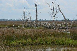 driftwood island 020