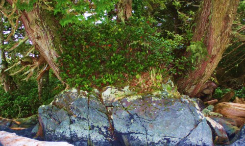 Out of the rock grows a forest. A fresh perspective on the meaning of life.