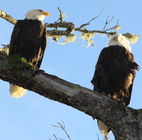 """""""Bloody hell it's cold!"""" """"Wouldn't be so bad if we cuddled up."""" """"Wot? We're eagles!"""""""