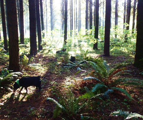 Jack in the Woods, A happy morning after three month apart...Bliss!