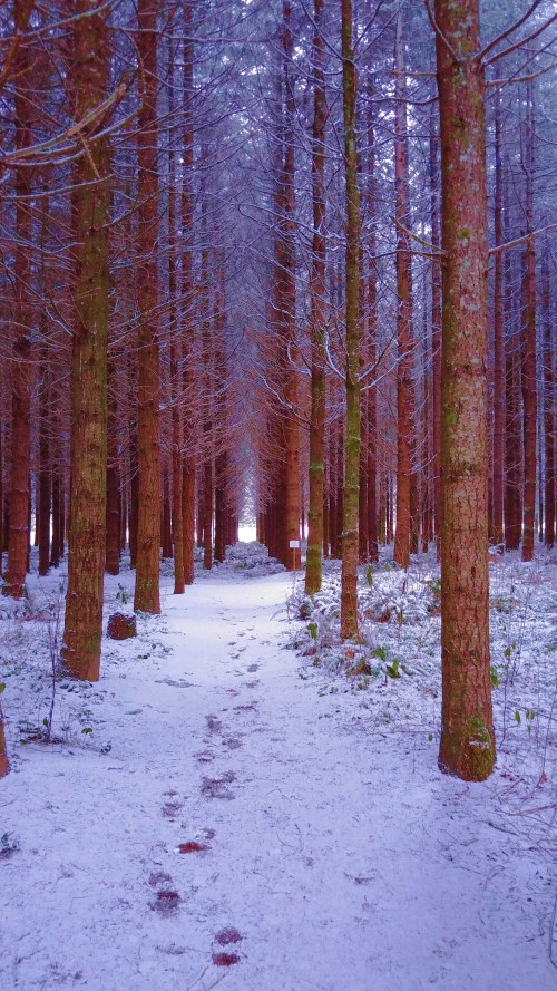Nature Organized A wintery walk fior Jack. The snow lasted a day.