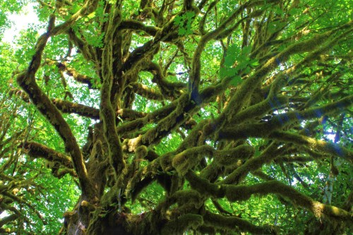 That you Tarzan? The moss and ferns make entire ecosystems in each tree