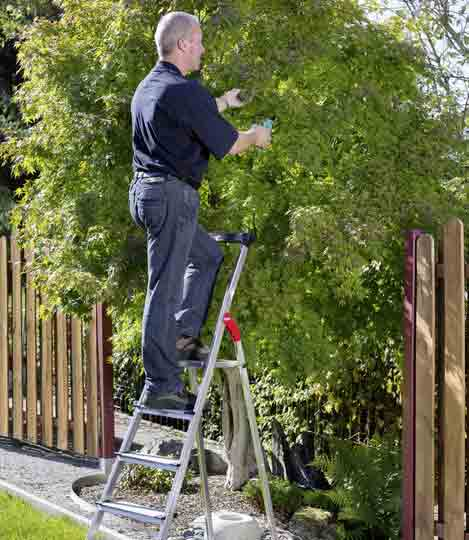 Step Ladder for garden