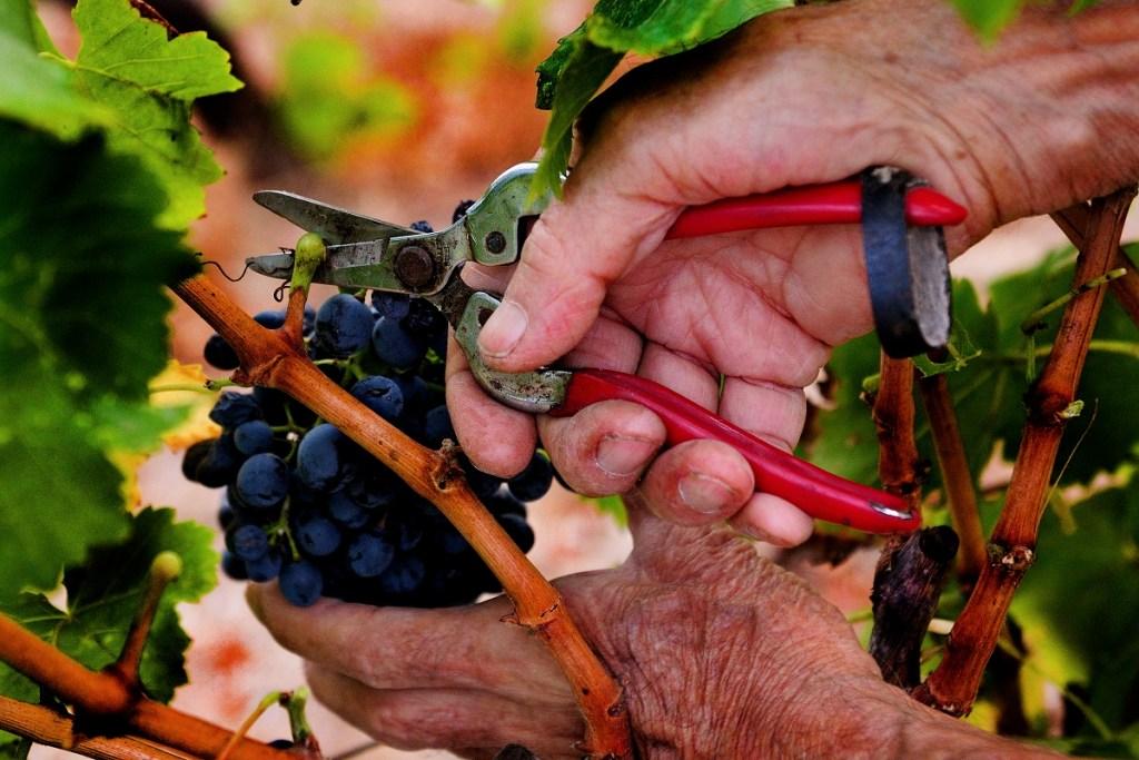 vitigno sardegna