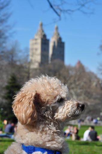 #68 Picnic in Central Park