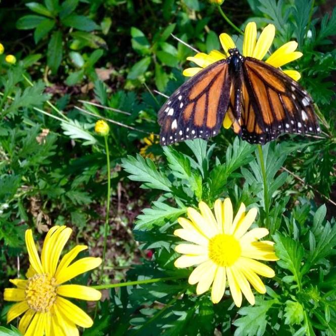 Butterfly Jarabacoa