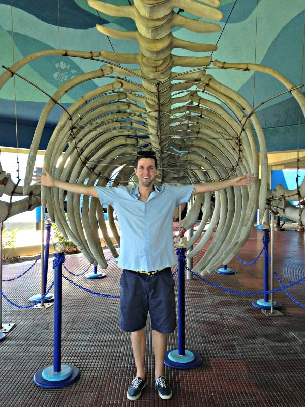 Whale bones at National Aquarium Santo Domingo
