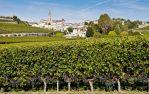 Какие виноградники купили в этом году Бернар Арно и Стенли Кронке