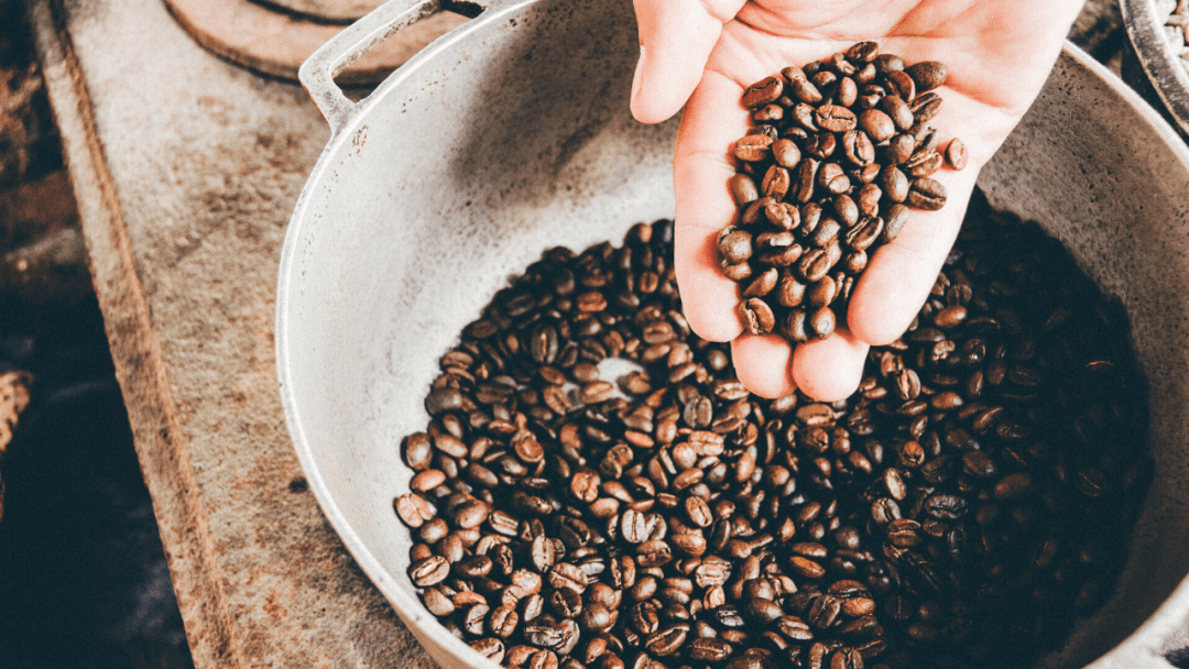 roasted coffee beans in a hand over a pot