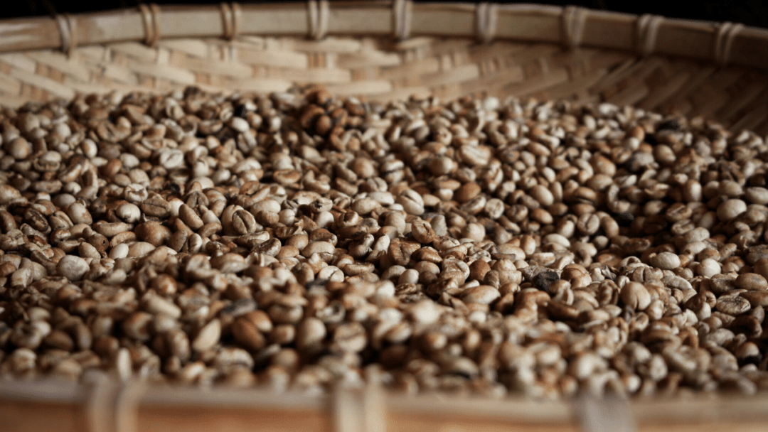 raw coffee beans in a big container