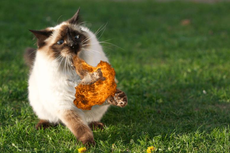 A cat utilizes its hidden technique (Fire Breath) on a helpless mouse.