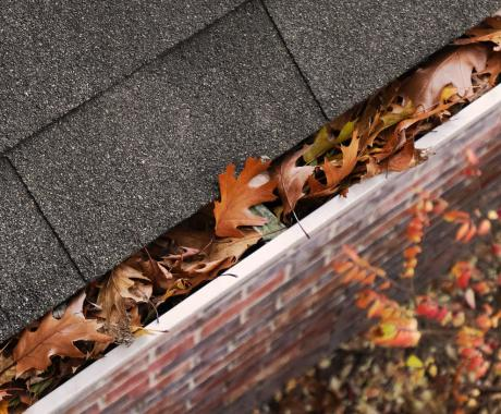 Can Clogged Gutters Make You Sick?