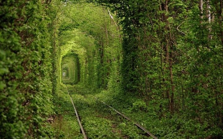 Fairy-Tale-Tunnel-of-Love-Found-in-Klevan-Ukraine-5