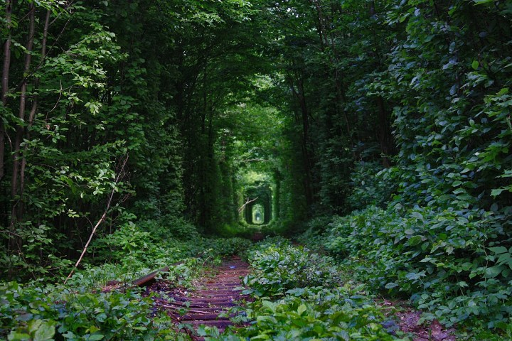 Fairy-Tale-Tunnel-of-Love-Found-in-Klevan-Ukraine-7