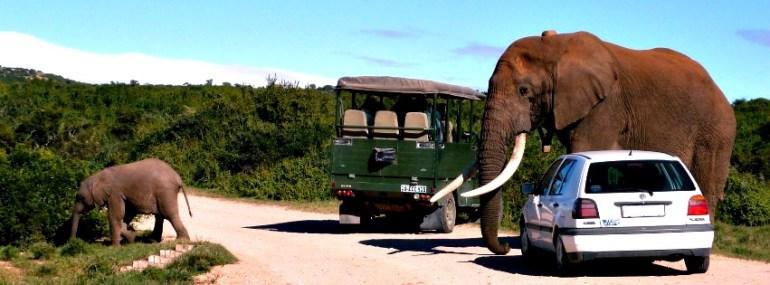 Addo Elephant National Park, South Africa