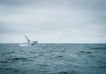 dove vedere le balene