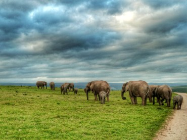 safari Addo Elephant Park