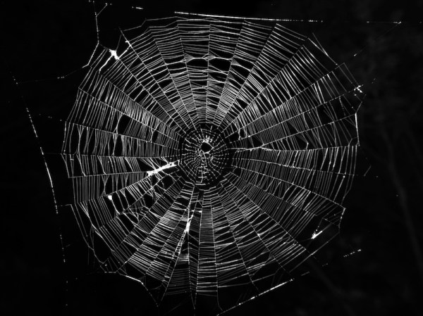Typical-orb-web-photo