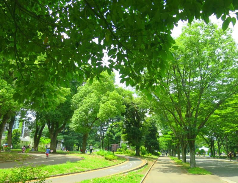 緑あふれる駒沢公園。東急田園都市線沿線に位置する。