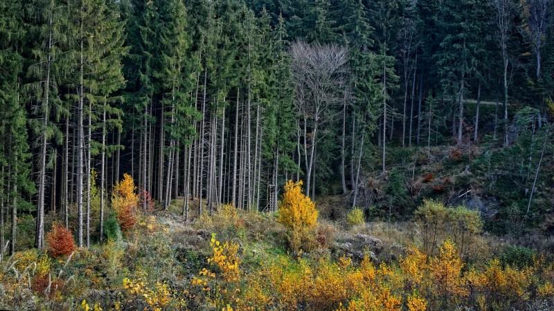 trees-1036958_1920