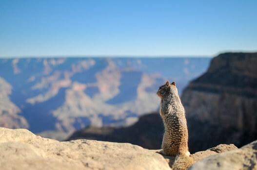 landscape-animal-mountain-top-medium