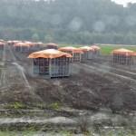 onion harvest at Kunneppu