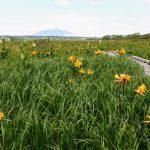 Sarobetsu wetland