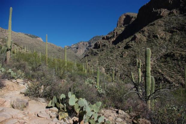 Pima Canyon