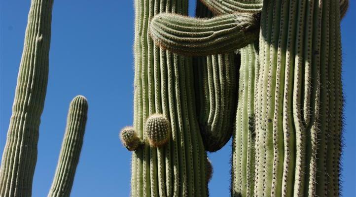 I Finally Understand Southern AZ