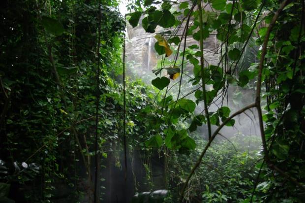 The Biosphere 2 rainforest
