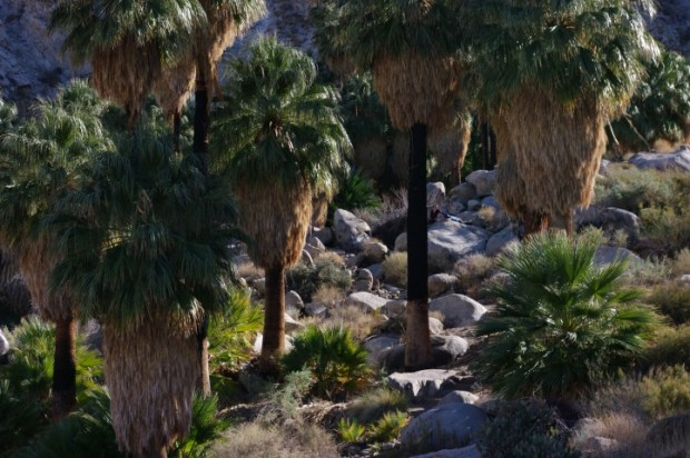 Some of the fire-blackened palms.