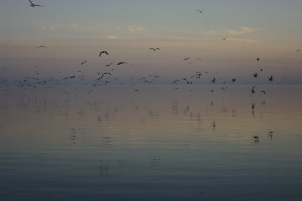 There are thousands and thousands of birds living it up on the sea.