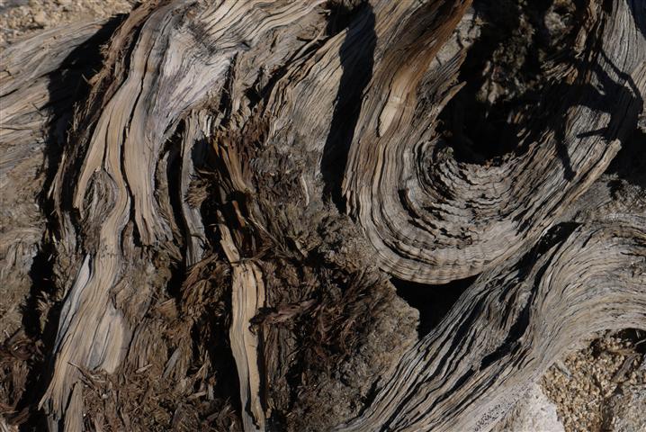 Old stump.