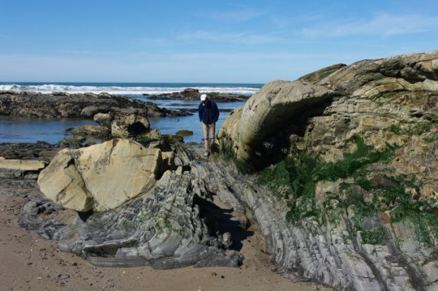 Paul looking for sea creatures.