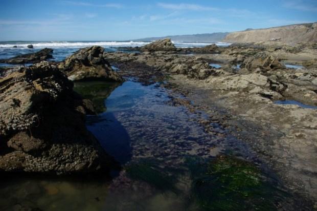 Sea grass in a tidepool.