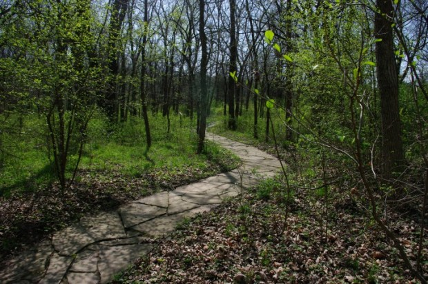 Leafy spring at the Overland Park botanical garden and arboretum.