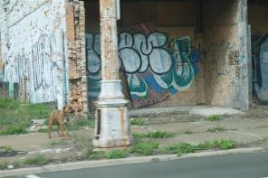 Graffiti, stray dog.