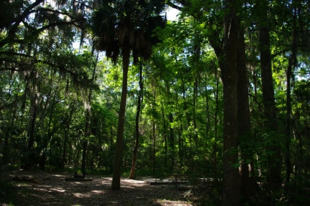 Our campsite at Skidaway Island State Park.