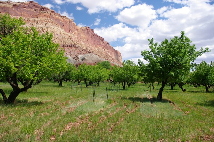 The Park Service is required to maintain the orchards that cover the valley floor.