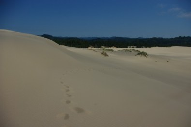 The dunes end abruptly in the forest.
