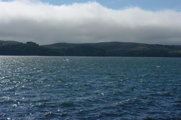 A windsurfer racing me along Tomales Bay.