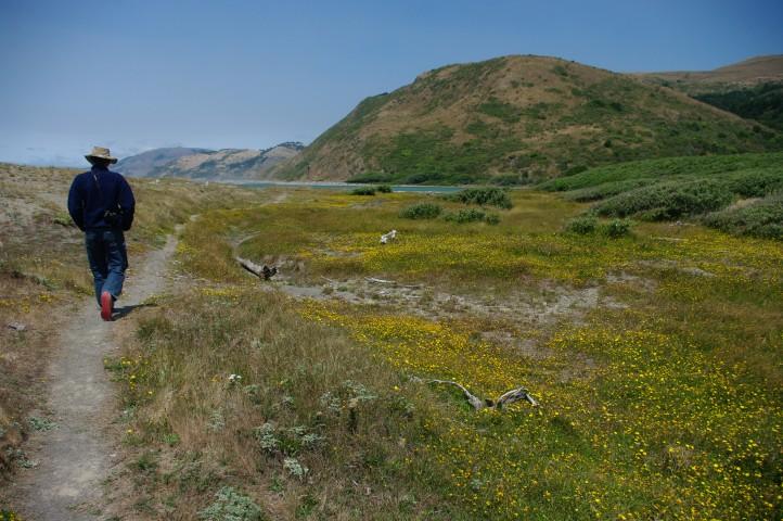 Trail to the lagoon near Mattole Beach.