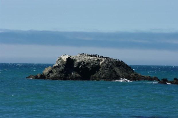 A bird rock.