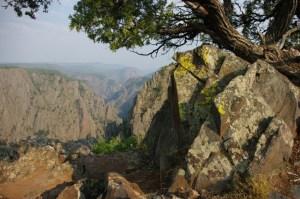 Rocks, lichen, trees.